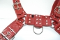 "Preview: Harness ""Exclusiv bi-rot"" 4 cm N°4126 R"